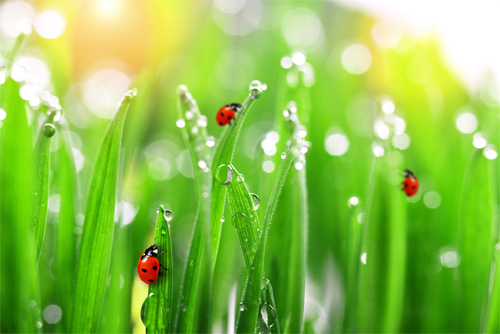 Insect Problems Lawncare Services Fertilizing Services