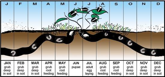 Insect Problems Lawncare Services Fertilizing Services