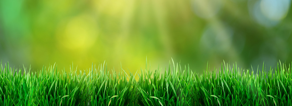 Services Lawncare Services Fertilizing Services